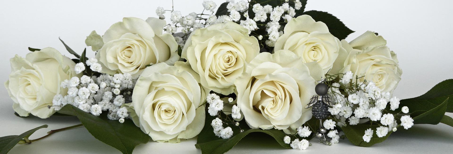 Découvrez nos sublimes roses